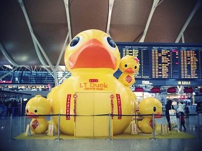 LT Duck1