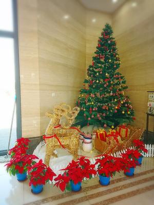 福寿園のクリスマスツリー
